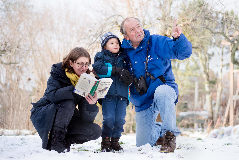 Wintervögel, Beobachtungstipps, Beobachtung