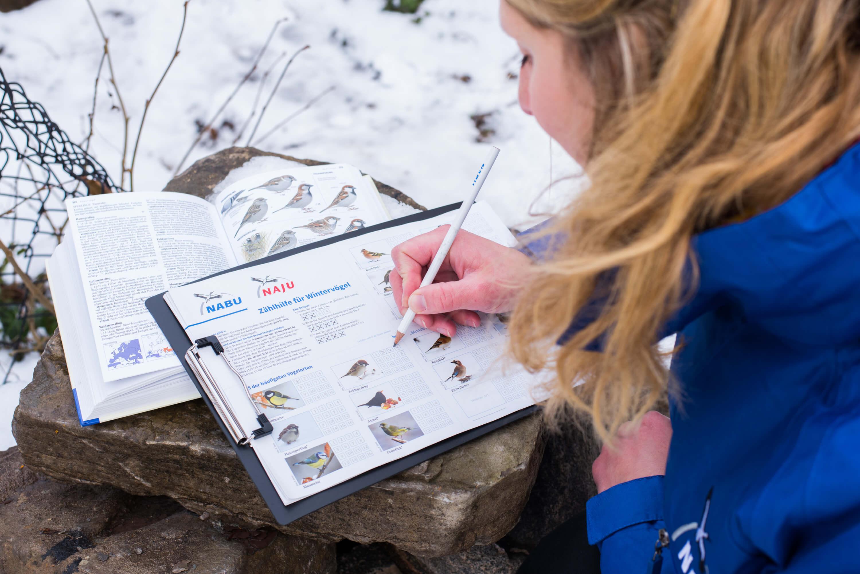Zählhilfe Vogelbeobachtung Wintervogel