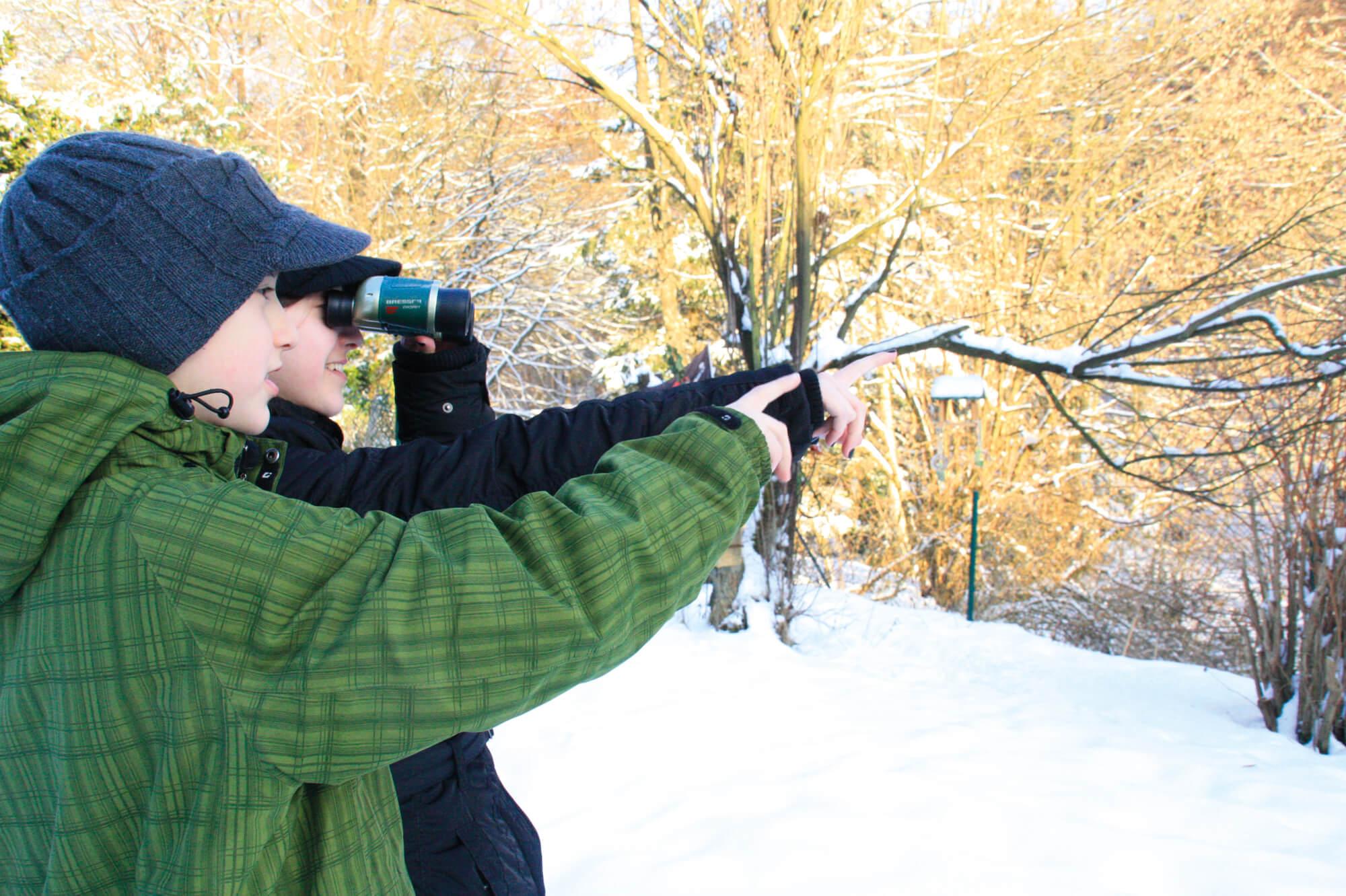 Beobachtung Wintervögel