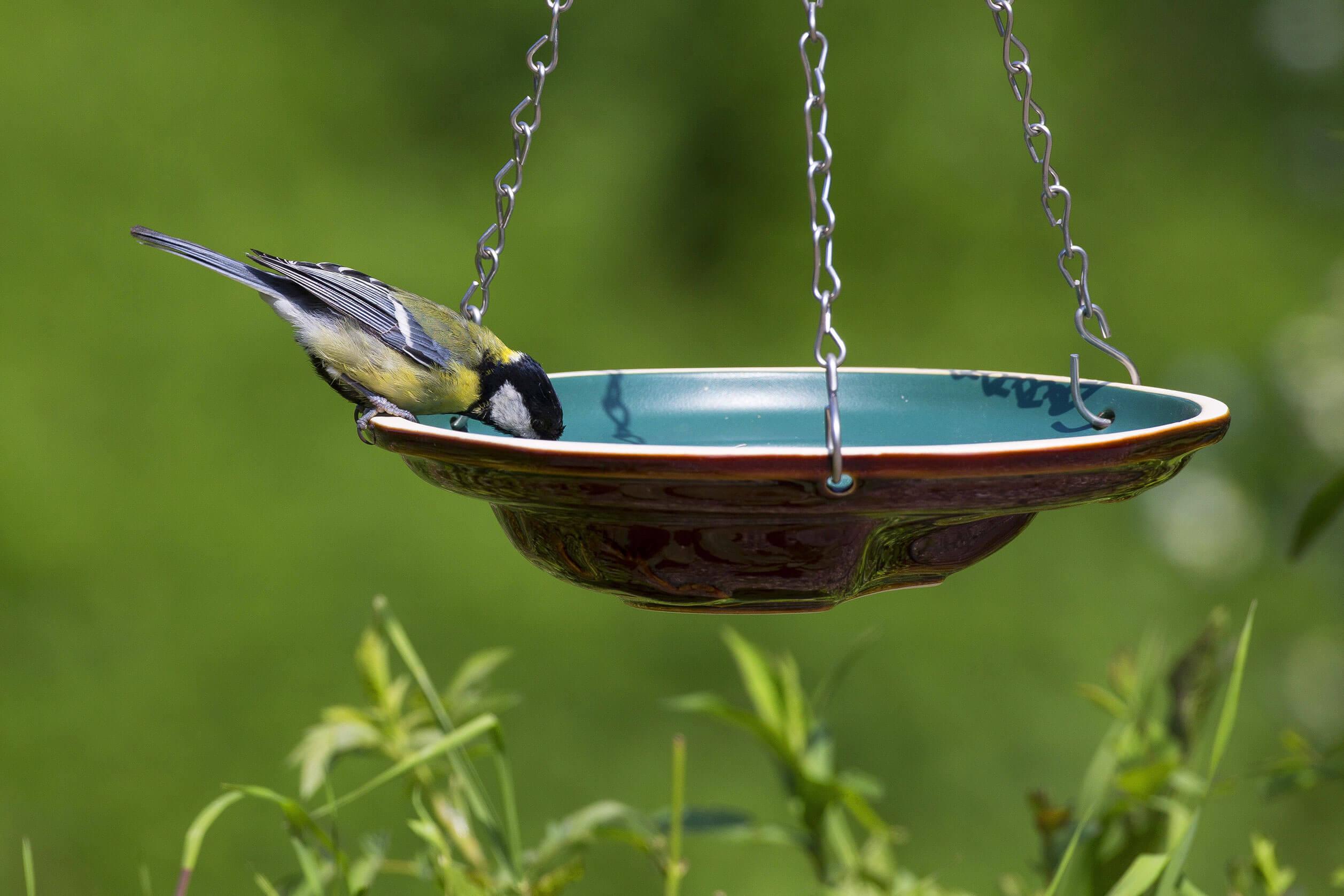 Kohlmeise an Vogeltränke